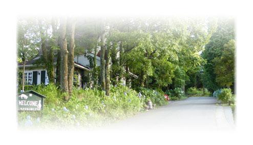 南阿蘇カフェ 緑の小箱 外観
